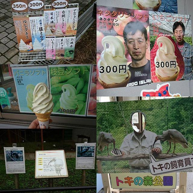 #トキの森公園 のア #アイス !今のおすすめは「 #枝豆ソフト 」なんだって!斉藤農園でとれたこだわり素材でバニラと相性バッチリうまい!コクもあって上品なさつまいもの甘さに近いかな?