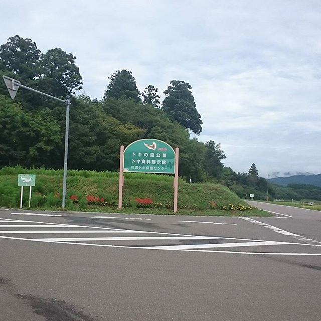 #トキの森公園 やっと着いた!閉園まで1時間!急ぐしか!