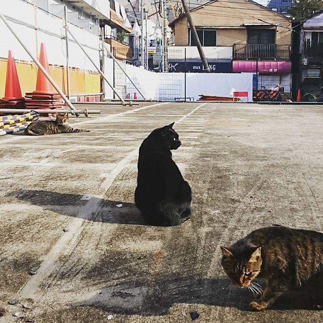 #駐車場の猫 あくびはしていない様子。 だらっと過ごしたい… #武蔵小山 #猫 #再開発地区