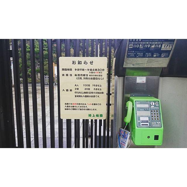 #散歩 #池上梅園  #入園料 100円ですにゃ。 #六義園 みたいにお茶飲めるところあると良いですにゃ~ #さむねこさんぽ