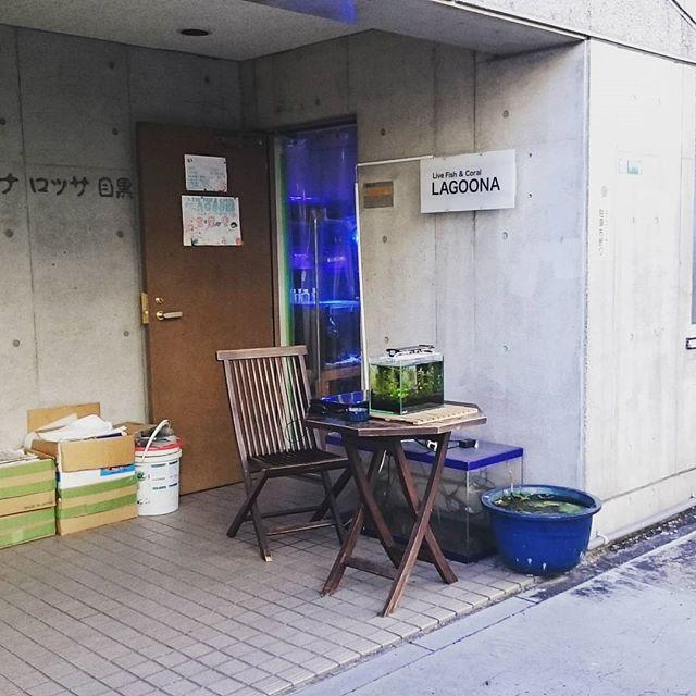 #武蔵小山 #熱帯魚屋 発見! #都道420号 を #学芸大学駅 方面に行くとあるにゃ。 気になるけど #入りにくい店 ですにゃ。今日は勇気持ってくるの忘れたから今度で! #散歩