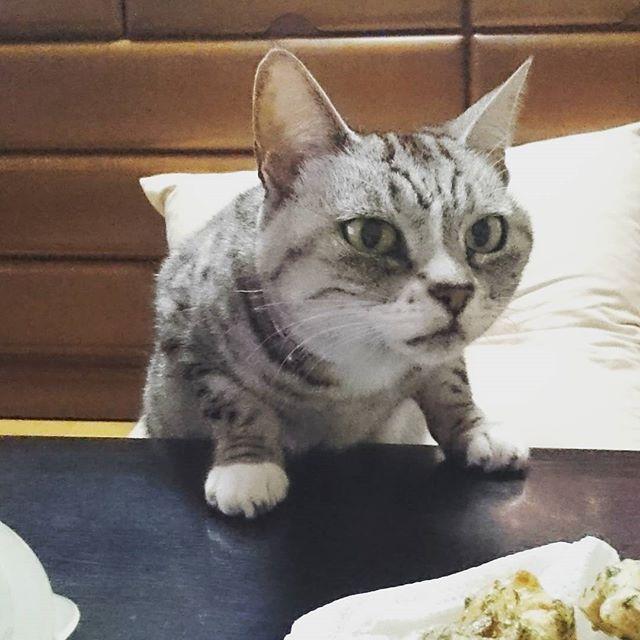 #明けましておめでとうございます 今年もよろしくお願いいたしますにゃ はやくも食べ過ぎペース… 実家だとね…  #happynewyear  #新年 #正月 #猫