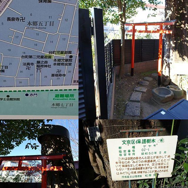 #東京散歩 #藤之森稲荷神社 #商売繁盛 の #パワースポット ですにゃ。#東京大学 の #赤門 から一番近い無名な #神社 #けやき の切り株が超でかいね #tokyo
