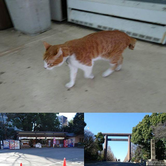 #東京散歩 #靖国神社 のお土産屋さんに #猫 発見!久しぶりに #散歩 中に猫おさえたね! #東京 #cat