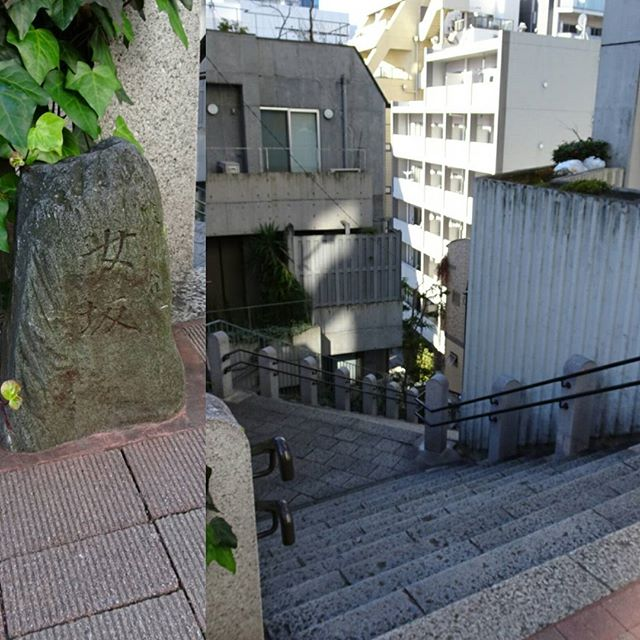 #東京散歩 #女坂 は #男坂 よりなだらかなんだって~ どっちもしんどいけどね~ #東京 #中央線 #散歩 #tokyo