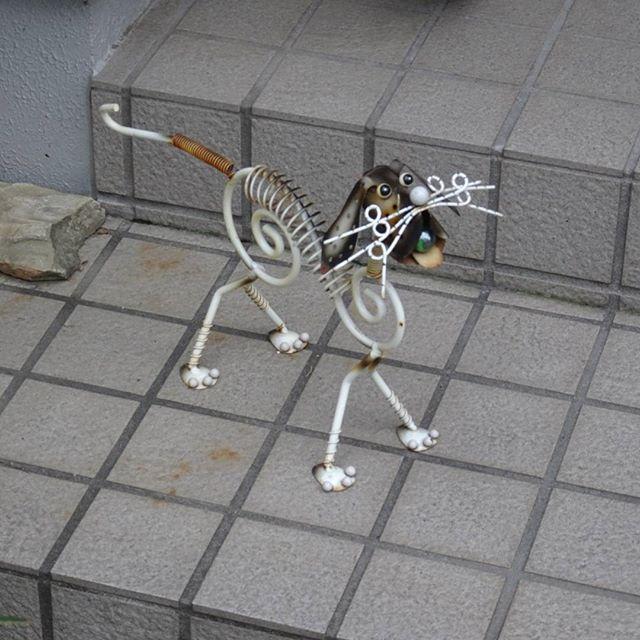 #東京散歩 #犬 ? #散歩 #東京 #tokyo #takeawalk