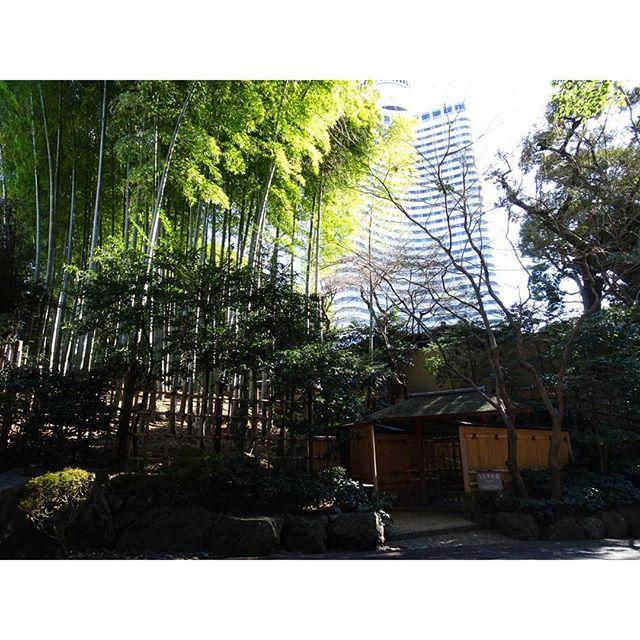 #東京散歩 #ニューオータニ #日本庭園 近くは高そうな料亭がいっぱい! #東京 #散歩 #tokyo