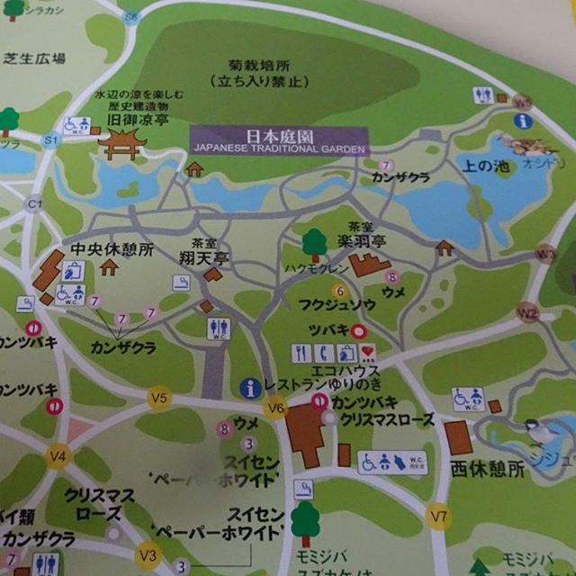 #東京散歩 #新宿御苑 #茶室 あるよ!! #抹茶 スポット 来たんじゃないの? #東京 #散歩 #tokyo