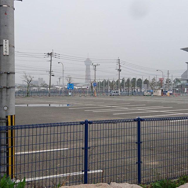 #旅猫 #博多ポートタワー おさえとくにゃ! #侍猫散歩 のルールは基本歩き!小雨位が燃えるにゃ!
