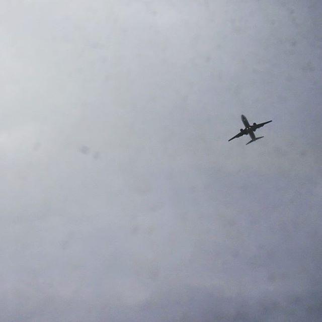 #旅猫 ここは空の飛行機がでかく見えるねぇ #福岡 #未来の嫁探しの旅