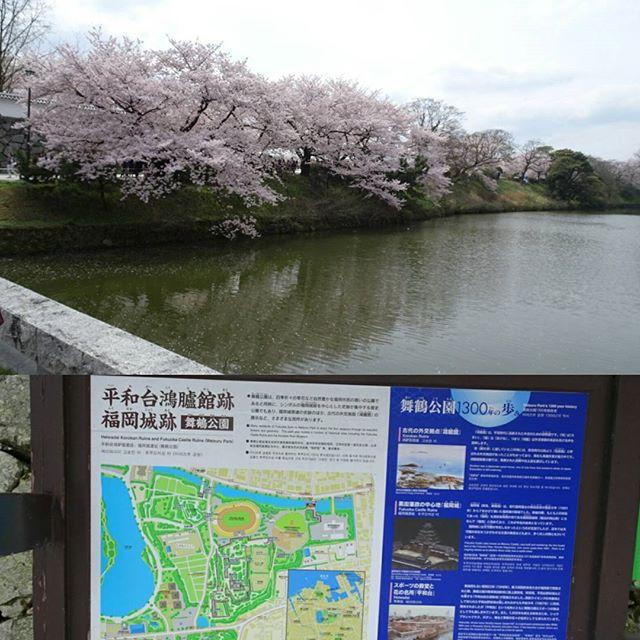#福岡城 結婚式が始まるまで時間があったので #福岡城 を見に行くにゃ!桜がすげぇ! #旅猫 #嫁探しの旅