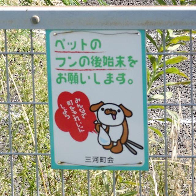 福島駅周辺の散歩 この犬ってば良い顔しとる!! #侍猫さんぽ