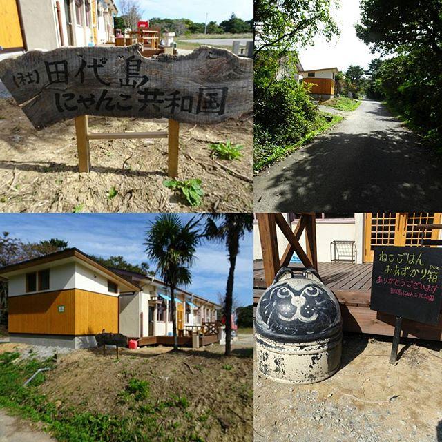 宮城県の猫島へ行ってみた!昨日キャットフード納付したところですな。猫餌寄付とか田代島にゃんこ共和国かクロネコ堂に聞けばわかるはず!http://nyanpro.com/index.html どっちもTwitterやってるよ!まぁ猫島へ直接行った方が散歩もできて面白いかもね! #侍猫さんぽ #猫島