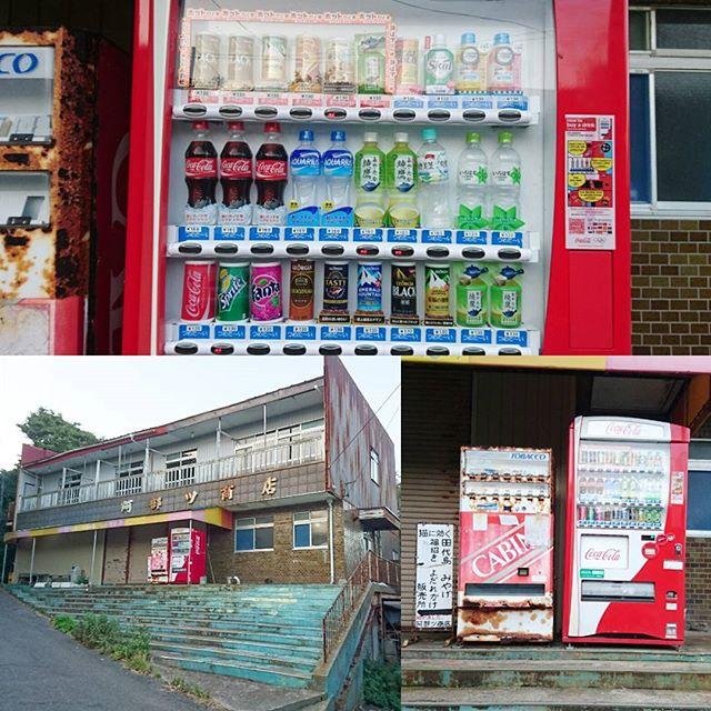 宮城県の猫島へ行ってみた! 猫島にはコンビニありませんが飲み物は自動販売機でなんとかなりますよ。お腹が空いたときはクロネコ堂でカレーを食べられますよ。 #侍猫さんぽ #猫島