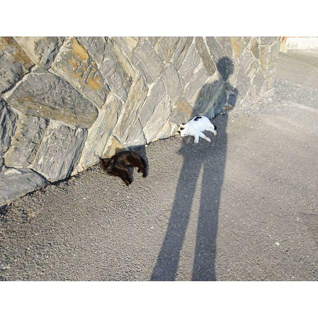 宮城県の猫島へ行ってみた! 稲荷神社付近にお住まいの猫たちは油断しすぎの件 #侍猫さんぽ #猫島