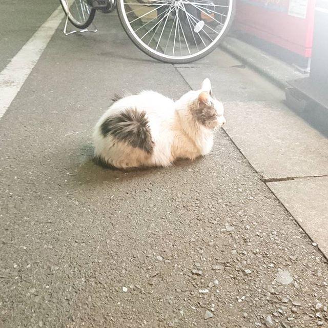 モフネコが店の前で並んでるね。美味しいお店なのかな? #ねこ #猫 #cat #武蔵小山