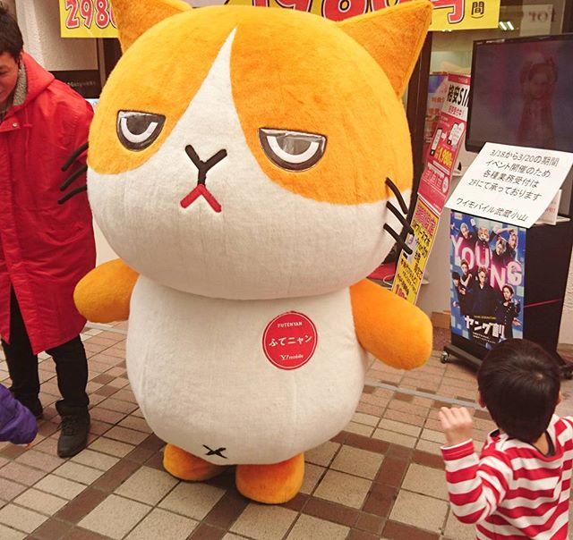 #ふてニャン でっけぇ!! #猫 #ネコ #cat