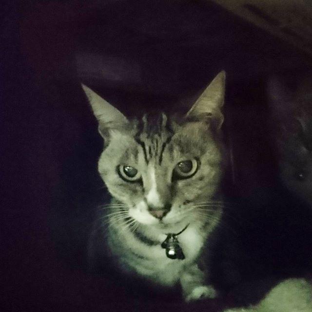侍猫さんの夏休み #060 お手伝い一段落だね。暗いところから急に猫が出てくるとビビるね。2匹猫が写ってるよ。  #大阪 #japan #trip #travel #ねこ #猫 #ネコ