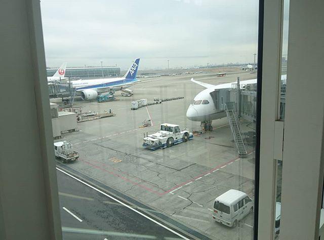 #侍猫さん台湾へ行く #003 羽田空港から早朝便で台湾へ向かいます。テレビでみたんだけどANAに乗るとチョッピリどじでお菓子作りが得意な綾瀬はるか的スッチーがいるらしいんだよね。#台湾 #台湾旅行 #旅行 #台北  #taiwan #taipei #sheraton