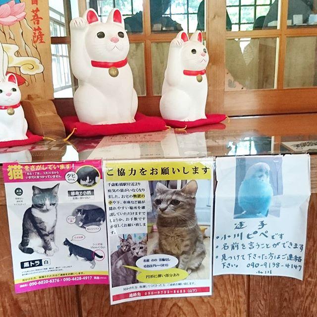 #豪徳寺 #迷い猫 #猫を探してます 見つかりますように。