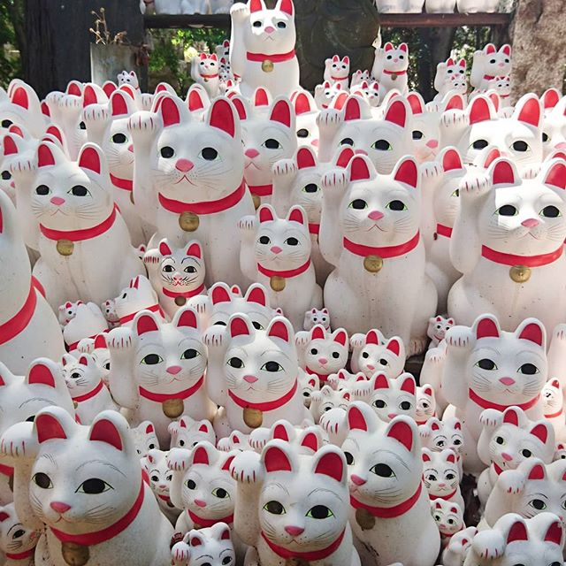 #豪徳寺 #招き猫 #パワースポット #猫 #寺 #cats #cat #japan #いんすたばえ #インスタ映え #インスタ映えするやつ でかい招き猫は5000円でゲットできるよ!お買い得!