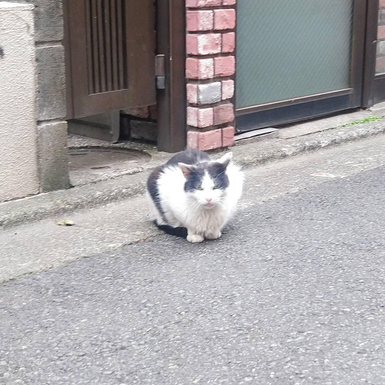 #武蔵小山 #猫 えぇ面構えしとる… 駅前に  #りゅえる って飲み屋街があった頃は猫沢山見かけたんだけどねぇ。今は、タワマンできちゃって綺麗になっちゃったね。今や猫はドラクエウォーク中に稀に出会える珍獣になってしまいましたな #武蔵小山の猫コレクション